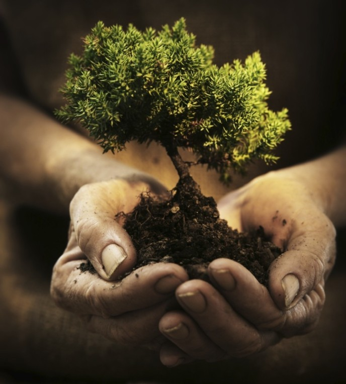 http://www.gibsontreecare.com/resources/hands-holding-a-small-tree-hidesy.jpg.opt688x764o0,0s688x764.jpg